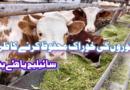 جانوروں کی خوراک، سائیلج یا ہئے بنانے کا طریقہ
