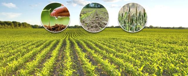 ملکی زرعی پیداوار میں کمی درآمدات بڑھ گئی