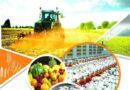 زراعت اور لائیوسٹاک کی پیداواربڑھنے سے ملک ترقی کریگا، صوبائی وزیر