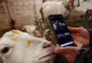 بکریوں کیساتھ ویڈیو کال سروس ،کسان کروڑ پتی بن گیا