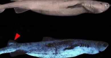 نیوزی لینڈ کے ساحلوں پر چمکنے والے شارک دریافت