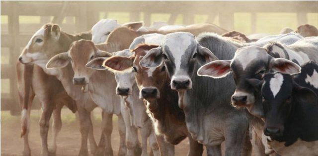 سینکڑوں کی تعداد میں جانور پراسرار بیماری سے ہلاک