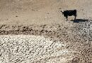 محکمہ موسمیات کا خشک سالی الرٹ جاری، زراعت و لائیوسٹاک متاثر ہونے کا خدشہ