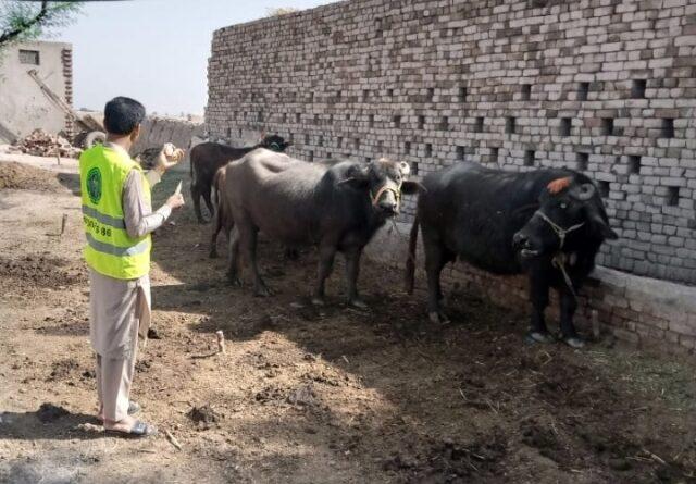 ویکسین لگانے پر بااثر زمینداروں کا ویٹرنری اسسٹنٹ پر تشدد، مقدمہ درج