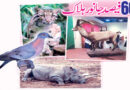 60 فیصد جانور ہلاک