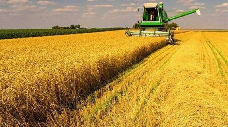 کارپوریٹ فارمنگ پر پنجاب کا پہلا قدم، محکمہ زراعت، لائیوسٹاک کی زمینوں پر ریسرچ