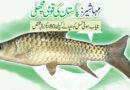 مہاشیر:پاکستان کی قومی مچھلی ,نایاب ہوتی نسل کو بچانے کیلئے 80ایکڑ رقبہ مختص