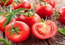 ٹیکنالوجی کی دنیا میں انقلاب،پہلے جینیاتی طور پر تبدیل شدہ ٹماٹر کی فروخت شروع